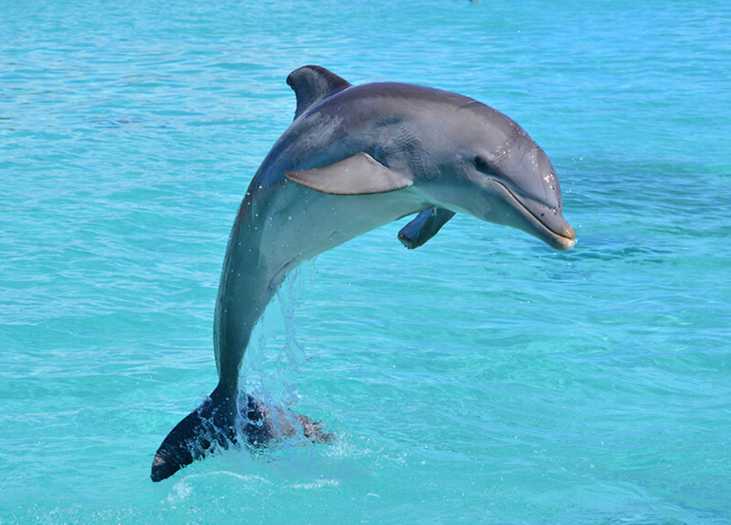 Fun facts about dolphins – The Plaid Line